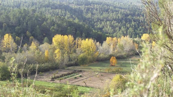 Huertas en el Valle