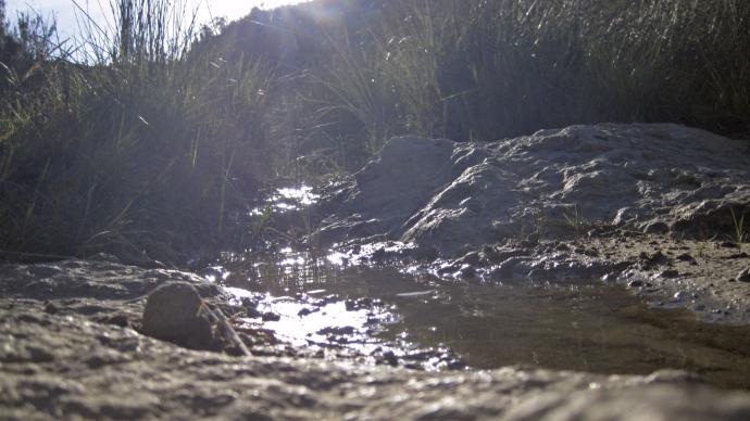 Riachuelo con rocas y juncos