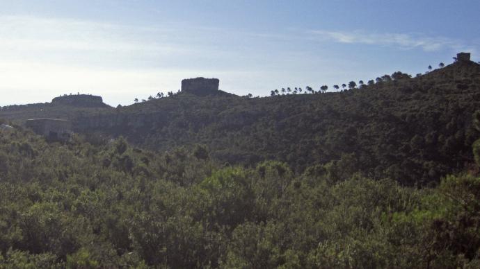 Tres monticulos y pinos