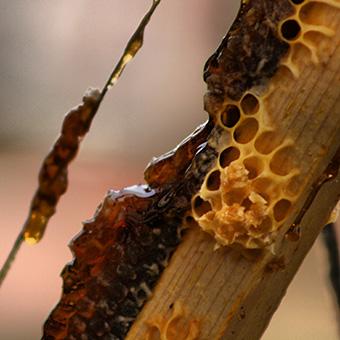 Celdas de la colmena