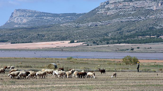 laguna,san benito, ovejas, pastor, cerro